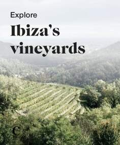 Explore Ibiza's vineyards