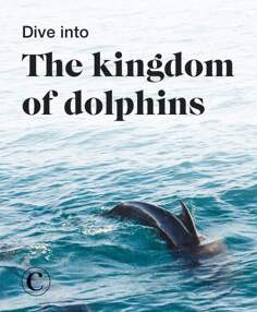 Dive into the kingdom of dolphins