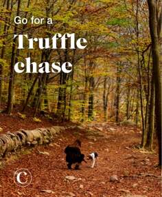 Go for a truffle chase