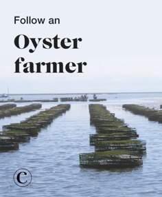Follow an oyster farmer